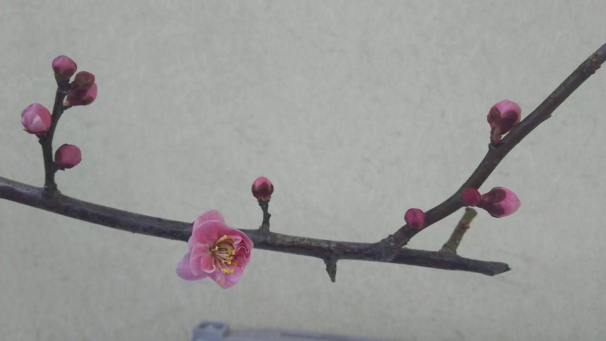 春めいてきました♪